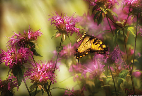 Photograph - Insect - Butterfly - Golden Age  by Mike Savad
