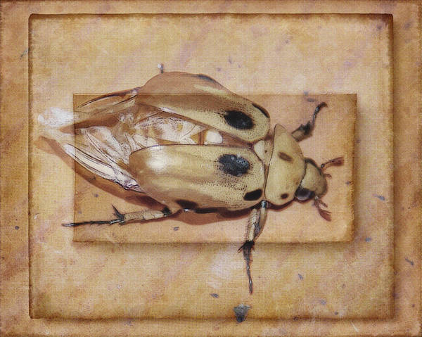 Photograph - Insect On Wooden Board by Janice Bennett