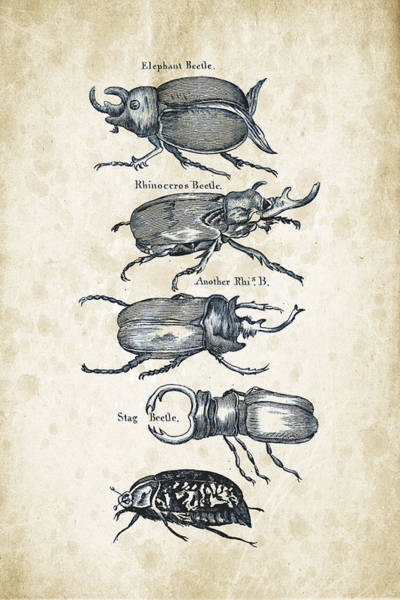 Wall Art - Digital Art - Insects - 1792 - 01 by Aged Pixel