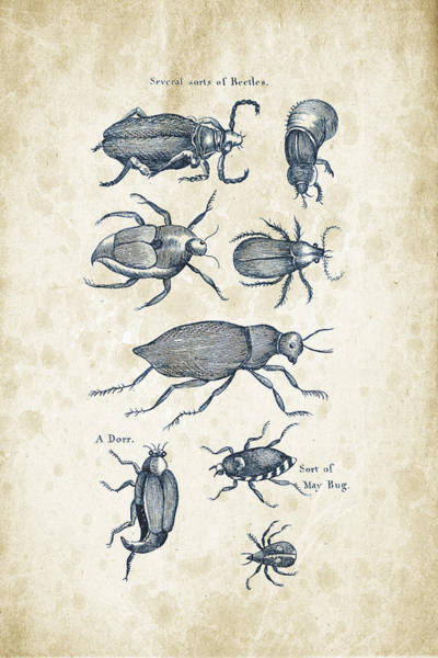 Wall Art - Digital Art - Insects - 1792 - 02 by Aged Pixel