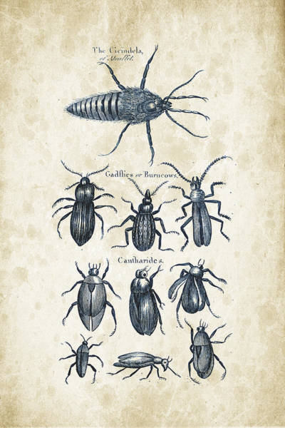 Wall Art - Digital Art - Insects - 1792 - 04 by Aged Pixel