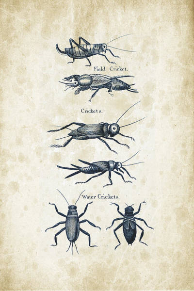 Wall Art - Digital Art - Insects - 1792 - 06 by Aged Pixel