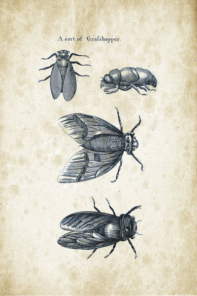 Wall Art - Digital Art - Insects - 1792 - 07 by Aged Pixel