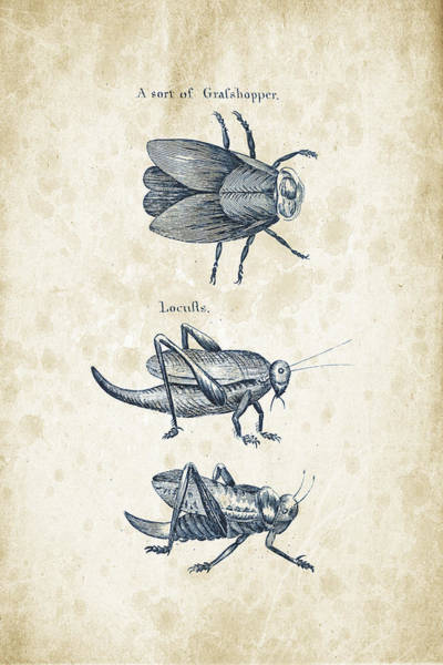 Wall Art - Digital Art - Insects - 1792 - 08 by Aged Pixel