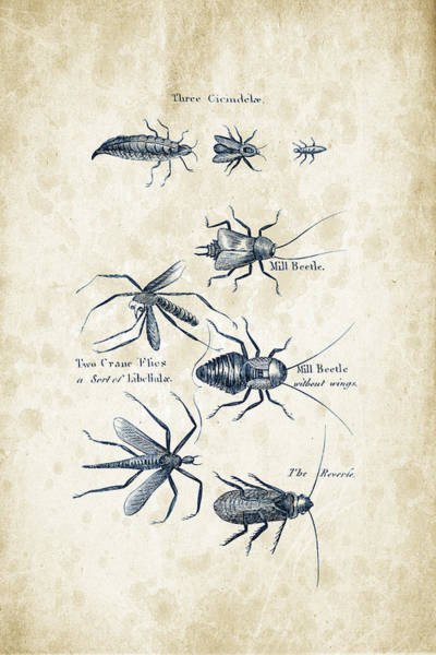 Wall Art - Digital Art - Insects - 1792 - 10 by Aged Pixel
