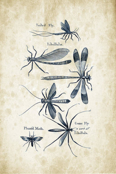 Wall Art - Digital Art - Insects - 1792 - 11 by Aged Pixel
