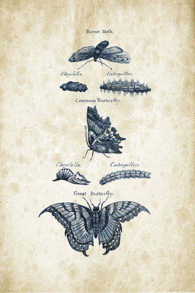 Wall Art - Digital Art - Insects - 1792 - 12 by Aged Pixel