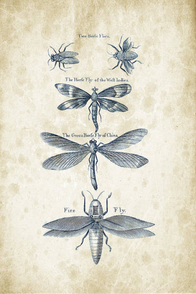 Wall Art - Digital Art - Insects - 1792 - 16 by Aged Pixel