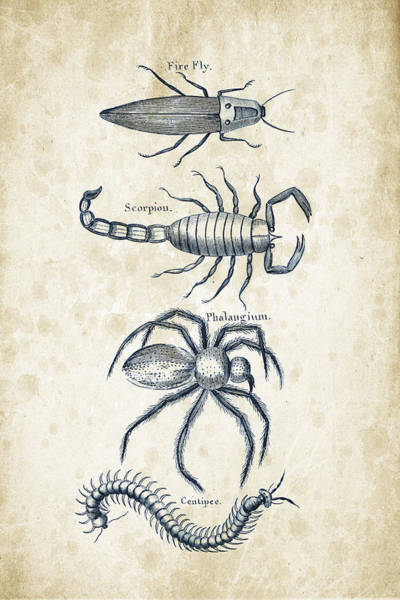 Wall Art - Digital Art - Insects - 1792 - 19 by Aged Pixel