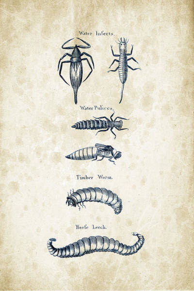 Wall Art - Digital Art - Insects - 1792 - 20 by Aged Pixel