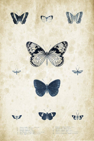 Wall Art - Digital Art - Insects - 1832 - 03 by Aged Pixel