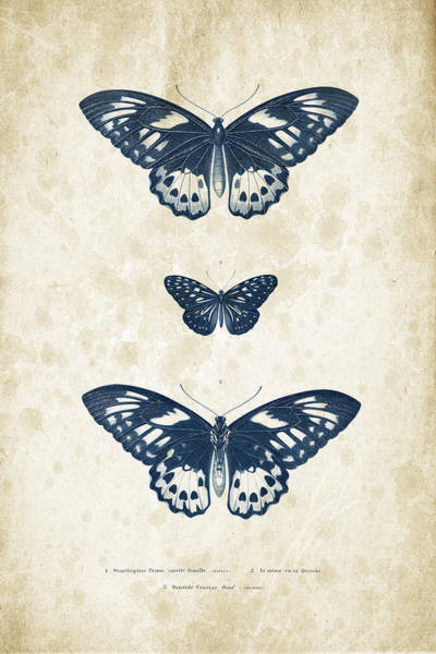 Wall Art - Digital Art - Insects - 1832 - 04 by Aged Pixel
