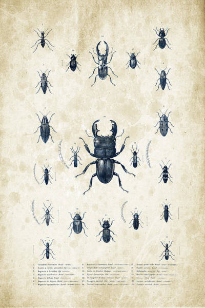 Wall Art - Digital Art - Insects - 1832 - 06 by Aged Pixel