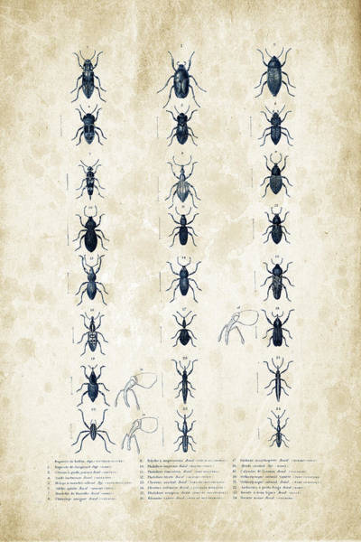 Wall Art - Digital Art - Insects - 1832 - 07 by Aged Pixel