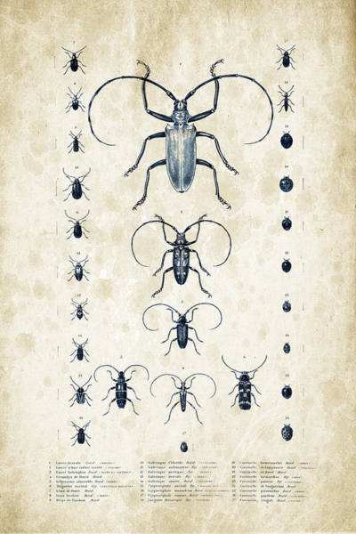 Wall Art - Digital Art - Insects - 1832 - 08 by Aged Pixel