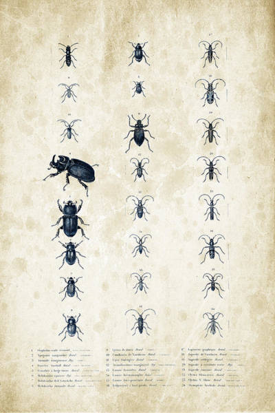 Wall Art - Digital Art - Insects - 1832 - 09 by Aged Pixel