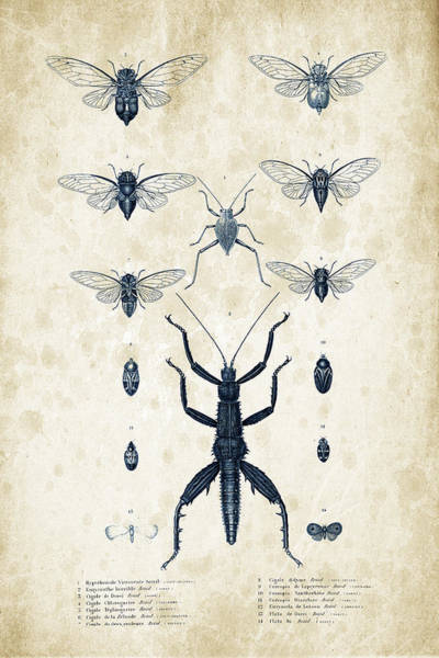Wall Art - Digital Art - Insects - 1832 - 10 by Aged Pixel