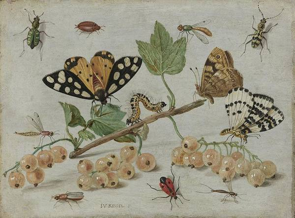 Arthropods Painting - Insects And Fruit, 1665 by Jan Van Kessel