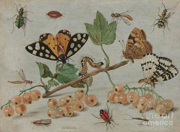 Wall Art - Painting - Insects And Fruit, by Jan Van Kessel