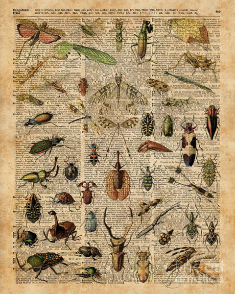 Wall Art - Digital Art - Insects Bugs Flies Vintage Illustration Dictionary Art by Anna W