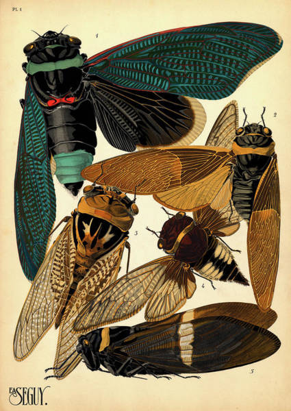 Wall Art - Painting - Insects, Plate-1 by Painter of the 19th century