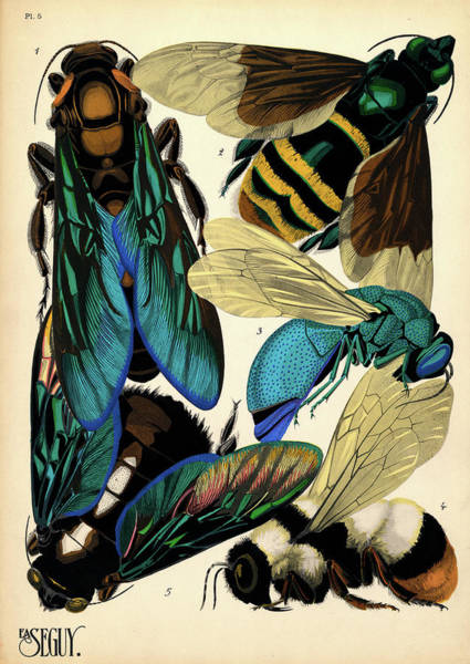 Antenna Painting - Insects, Plate-5 by Painter of the 19th century