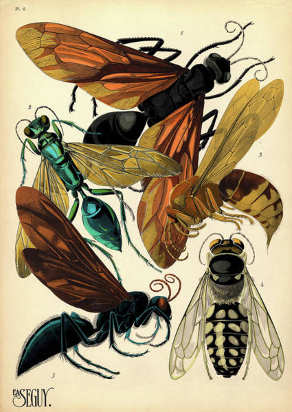 Antenna Painting - Insects, Plate-6  by Painter of the 19th century