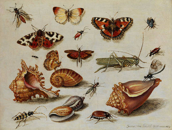 Wall Art - Painting - Insects, Shells And Butterflies by Jan van Kessel