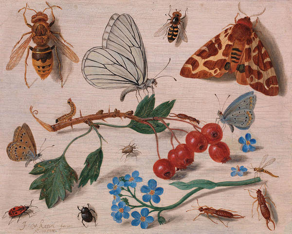 Wall Art - Painting - Insects With Common Hawthorn And Forget-me-not by Jan van Kessel the Elder