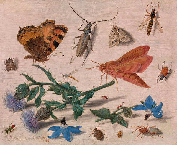 Wall Art - Painting - Insects With Creeping Thistle And Borage by Jan van Kessel the Elder