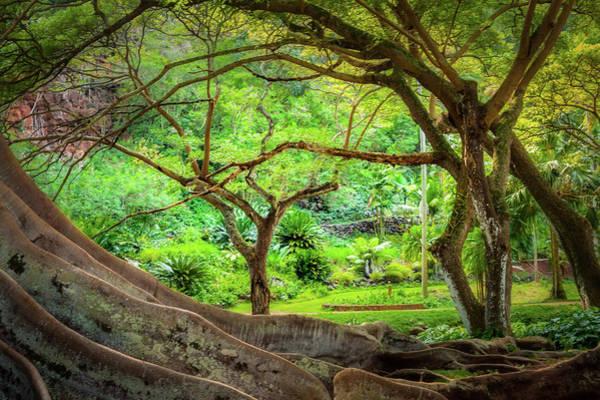 Allerton Garden Photograph - Inside Allerton Garden by Gary Eyring
