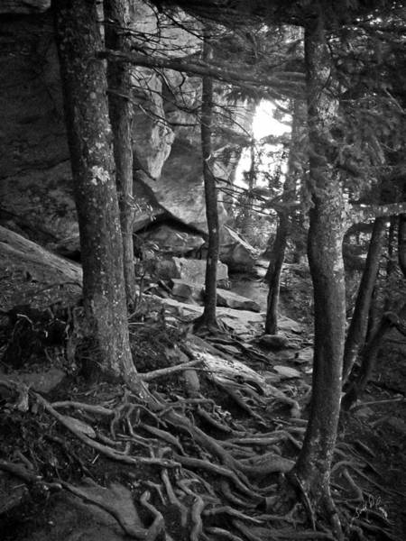 Photograph - Inside Grandfather Mountain by Williams-Cairns Photography LLC