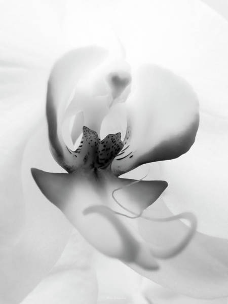Wall Art - Photograph - Inside Orchid by Wim Lanclus