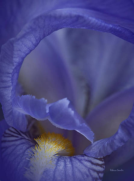 Photograph - Inside The Iris by Rebecca Samler
