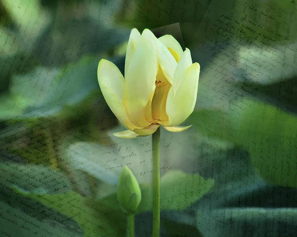 Wall Art - Photograph - Inside The Lotus by Nikolyn McDonald