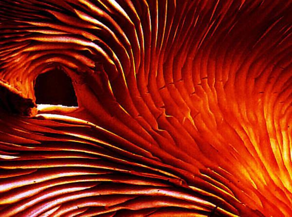 Photograph - Inside The Oyster by Jeff Kurtz