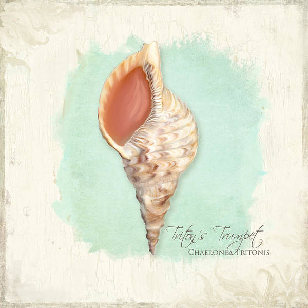 Wall Art - Painting - Inspired Coast Vi - Triton's Trumpet Shell On Board by Audrey Jeanne Roberts
