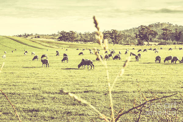 Photograph - Instagram Styled Australian Farmyard by Jorgo Photography - Wall Art Gallery