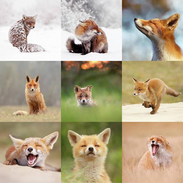 Instagram Photograph - Instagram's Best Nine Foxes by Roeselien Raimond