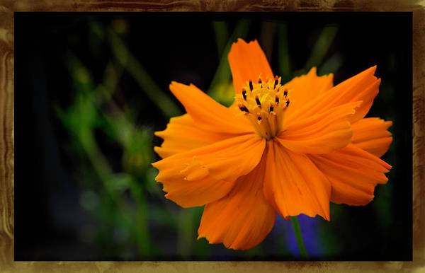 Otp Photograph - Intense In Orange by Marshall Barth