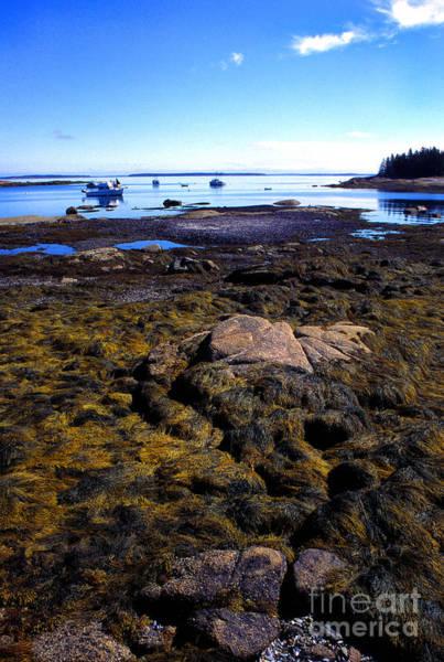 Photograph - Inter-tidal Zone Deer Isle by Thomas R Fletcher