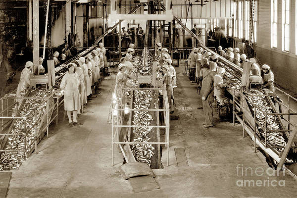 Photograph - Interior View Of Three Double Packing Tables Of The Main At Hovden Cannery 1927 by California Views Archives Mr Pat Hathaway Archives
