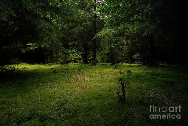 Photograph - Internationaler Tag Des Waldes - International Day Of Forests - Wood Glade In The Urft Valley by Urft Valley Art