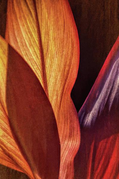 Photograph - Interweaving Leaves I by Leda Robertson