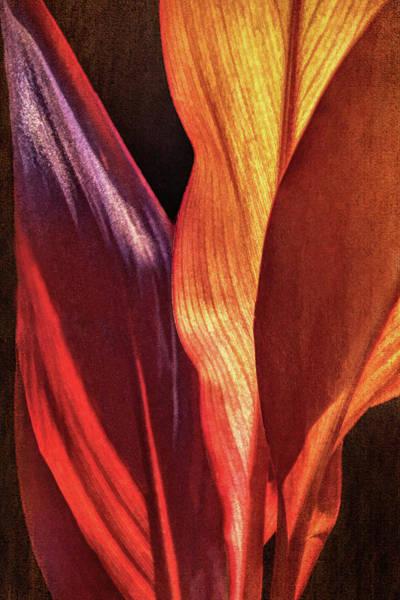 Photograph - Interweaving Leaves II by Leda Robertson