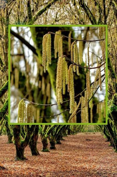 Photograph - Intimate Hazelnut Orchard by Jerry Sodorff