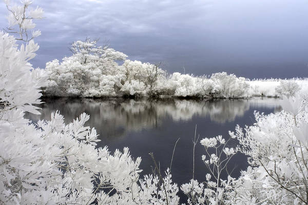 Photograph - Intimate Lake In Infrared by Liza Eckardt