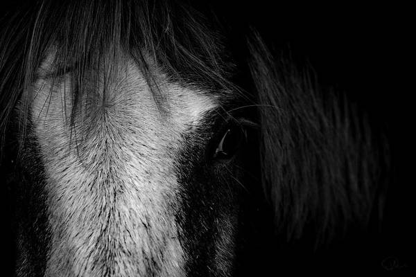 Ponies Photograph - Intimate  by Paul Neville
