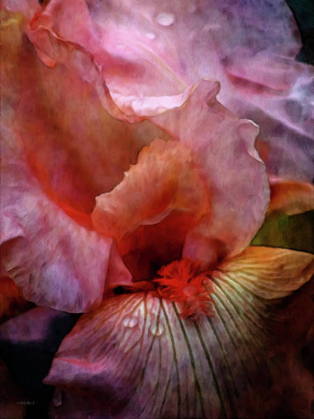 Photograph - Intimate Pink Iris 9915 Idp_22 by Steven Ward