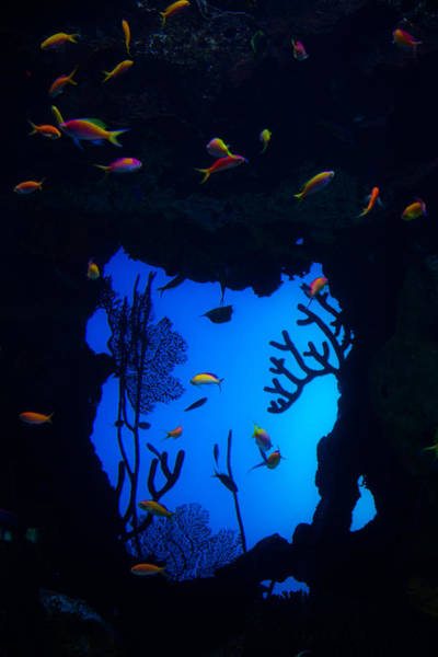 Georgia Aquarium Wall Art - Photograph - Into Another World by Karol Livote